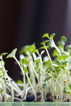 Fehler beim Vorziehen von Gemüse vermeiden