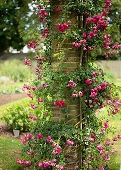 Ideen für einen Rosengarten