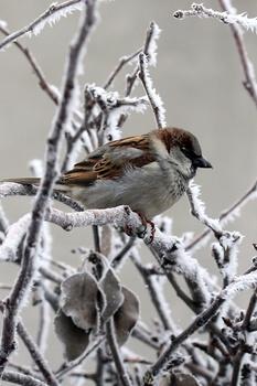 Wie du Vögel im Winter helfen kannst