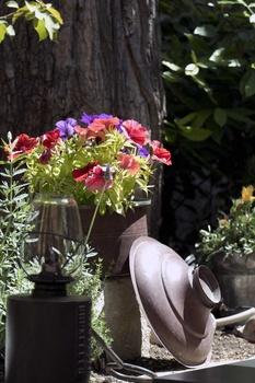 Pflanzkübel richtig bepflanzen und Kübelpflanzen richtig pflegen