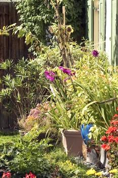 Hitzestress bei Pflanzen vermeiden