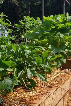 Einen pflegeleichten Gemüsegarten anlegen - so gelingt´s
