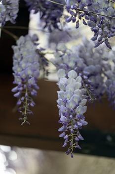 10 lang blühende Sträucher für den Garten