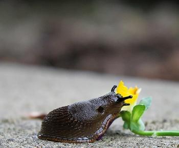 Schnecken ohne Gift vom Hochbeet oder Garten abwehren oder vertreiben