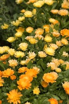 Attraktive Pflanzen als Lückenfüller