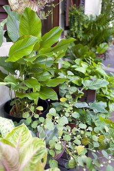 Zimmerpflanzen im Winter richtig pflegen