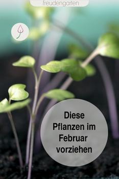 Aussaatplan für den Februar