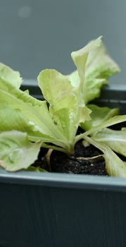Gemüse-Beet für Kinder anlegen
