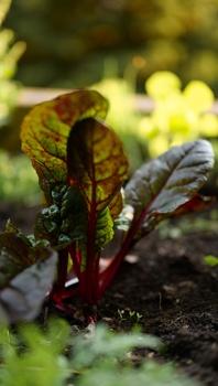 Gemüse für das Blumenbeet