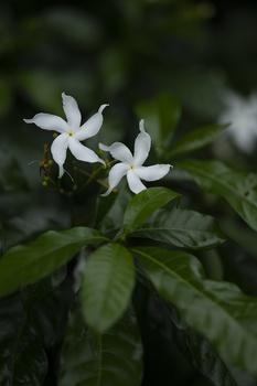 Tropische Heilpflanzen und Gewürzpflanzen