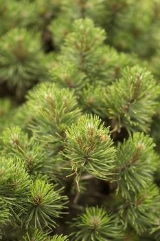 Wurzelnackte Pflanzen, Pflanzen mit Ballen oder Containerpflanzen?
