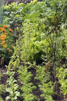 Nachzucht von Gemüse