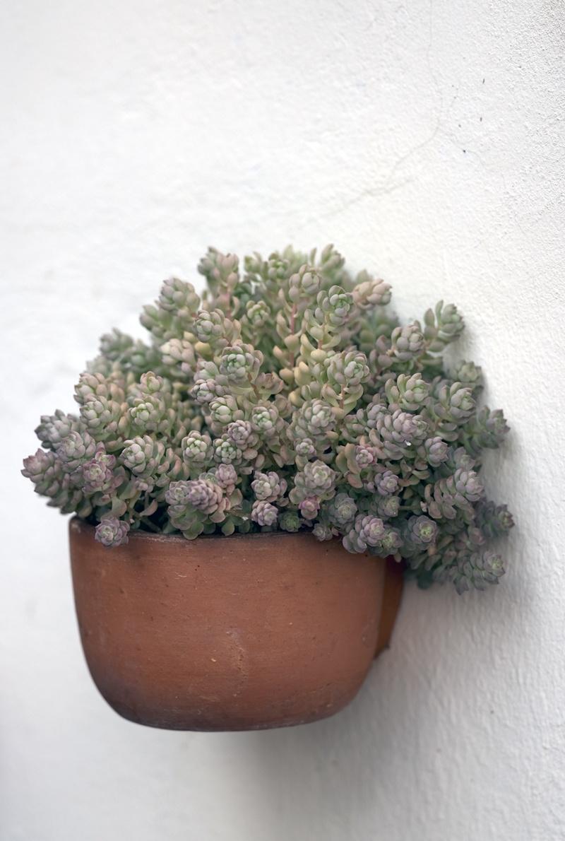 Zimmerpflanzen übersommern