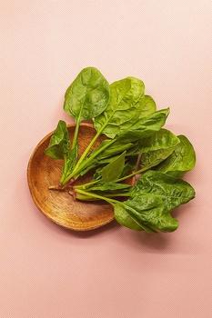 Spinat ernten – Erntezeit, zubereiten einfrieren und lagern
