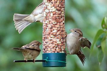 Die 8 größten Fehler beim Füttern von Vögeln