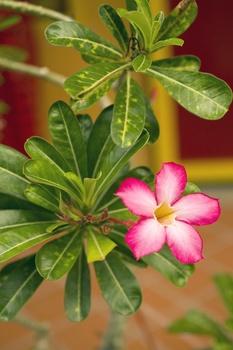 10 ausgefallene Zimmerpflanzen