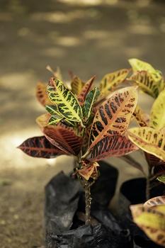 12 Zimmerpflanzen mit bunten Blättern