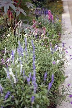 Schöne Wegbegleiter - Pflanzen für den Gartenweg