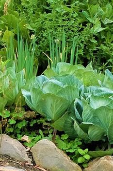 Tipps für eine große Ernte im kleinen Garten