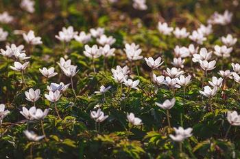 Die 11 schönsten Frühlingsblumen für den Schatten