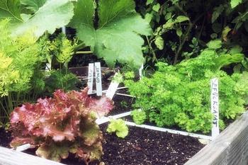 Pflegeleichtes Gemüse im Garten und auf dem Balkon anbauen