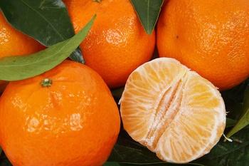 Unterschied zwischen Clementine, Mandarine und Satsuma