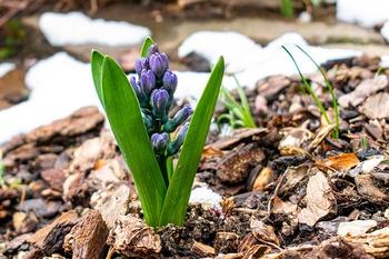 9 Arbeiten im Garten, die du im Frühling erledigen musst