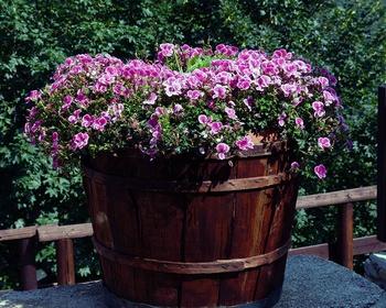 Gebrauchte Blumenerde aufbereiten statt entsorgen
