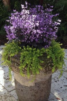 Die besten Hängepflanzen für Pflanzkübel