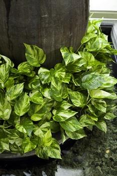 Die 6 schönsten Kletterpflanzen für das Zimmer