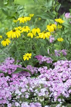 4 Tipps für günstige Gartenpflanzen