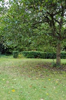 Rasen im Herbst richtig pflegen