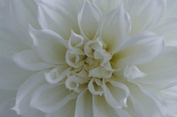Dahlien: bis in den Herbst große Blüten und leuchtende Farben
