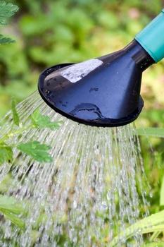 Wasser im Garten sparen