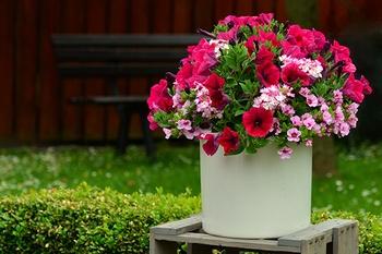 Bauernregel Eisheilige: Welche Pflanzen dürfen schon in den Garten?