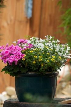 10 Fehler, die du bei Kübelpflanzen vermeiden solltest
