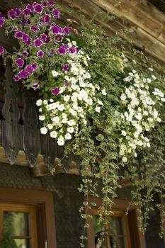 Bewässerungssystem für den Balkon ohne Wasseranschluss