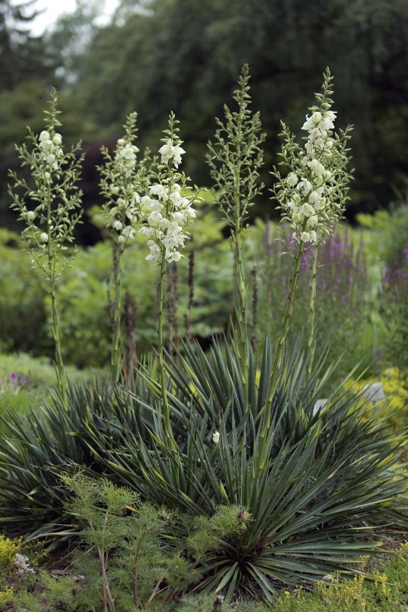 8 Tipps, um den Garten auf Trockenheit vorzubereiten   freudengarten