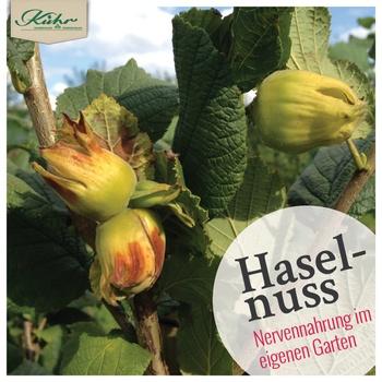 Haselnuss-Pflanzen: Hier gepflanzt - Hier gewachsen - Hier geerntet