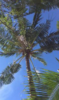 Palmen auf Langkawi
