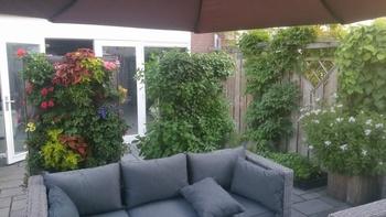 Vertikalbegrünung - Fassadenbegrünung Outdoor