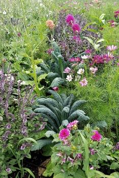 Nutzpflanzen und Zierpflanzen im gleichen Beet | Mischkultur im Naschgarten