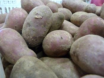 Die Rote Emmalie ist die Kartoffel des Jahres 2018