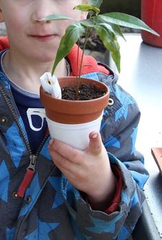 Gärtnern Mit Kindern: Litschi Kerne Pflanzen