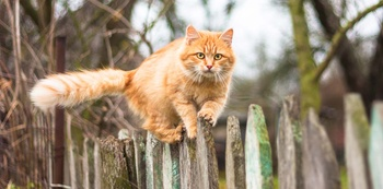 Fremde Katzen aus dem Garten fernhalten