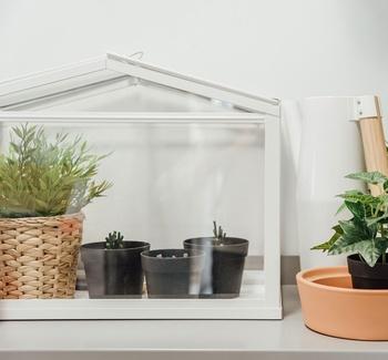Was man beim Bau eines Mini-Gewächshauses beachten sollte