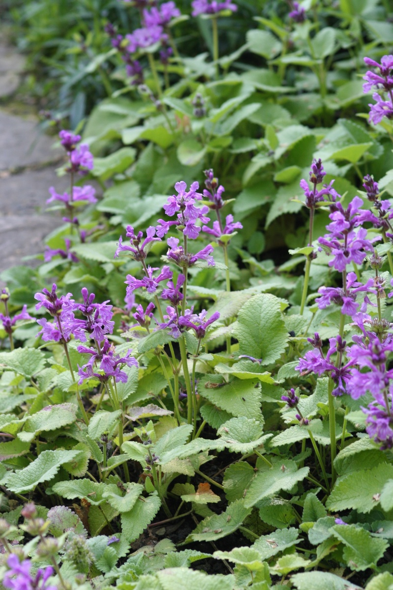 Kleine Bienenfreundliche Pflanzen