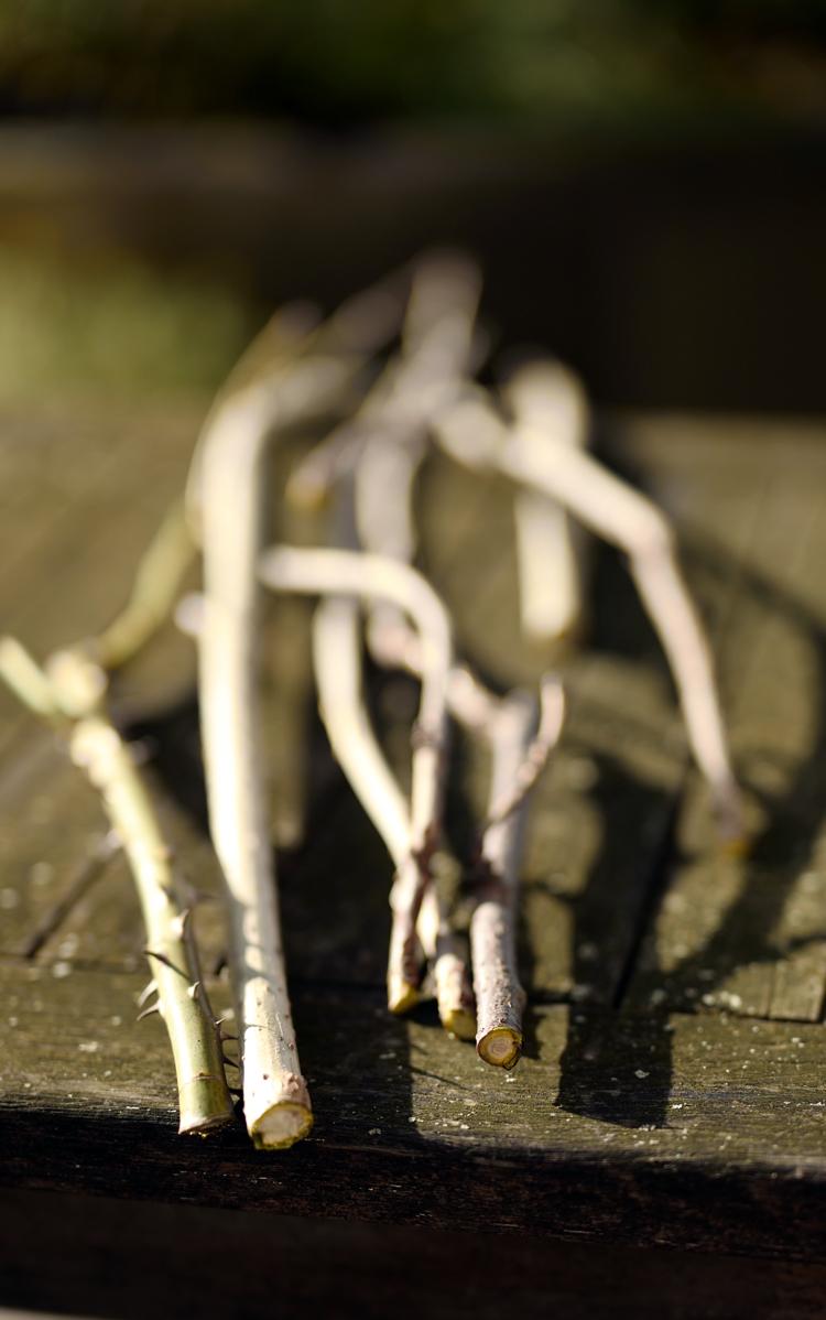 Pflanzen mit Steckhölzern vermehren