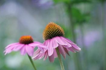 Blüten in Hülle und Fülle im Hochsommer