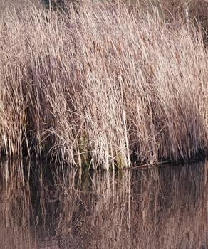 So wird der Teich im Herbst winterfest